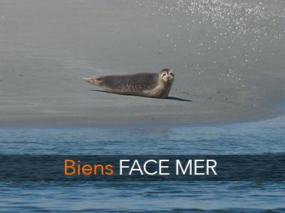 face-mer
